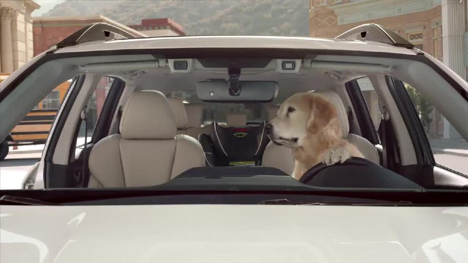 斯巴鲁和狗之间的故事
