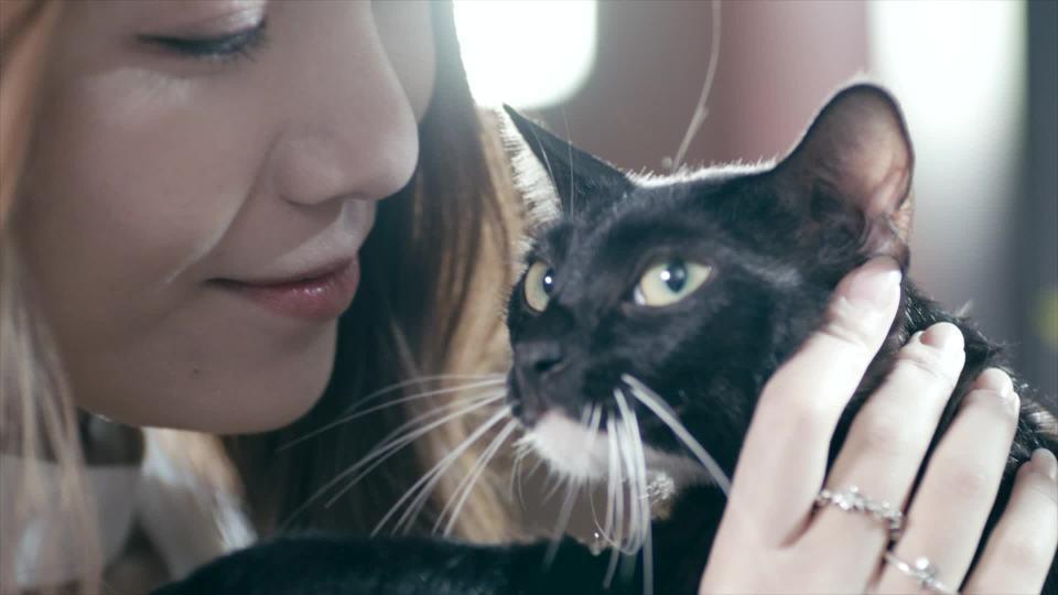 美女训猫师和雷凌185T一起做带劲的事儿